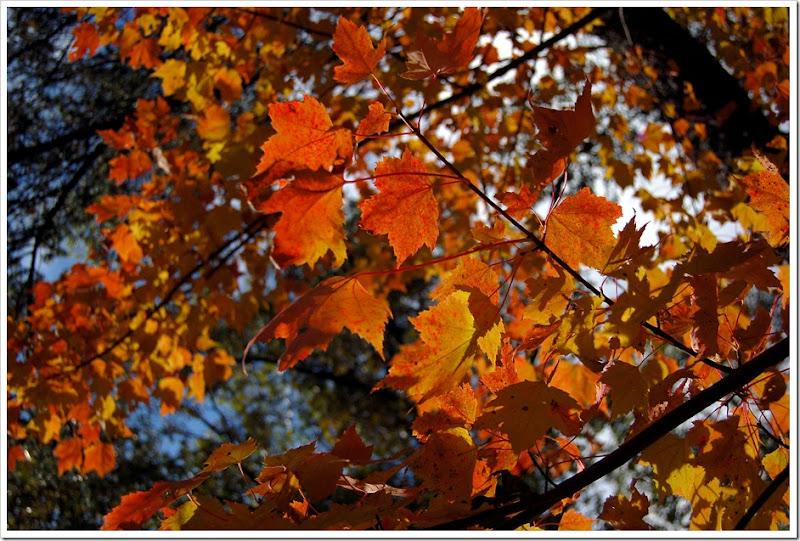 fall12pic