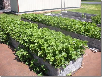 garden 5-13 017