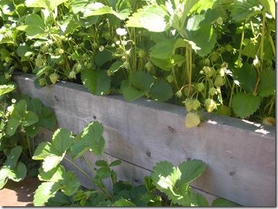 garden 5-13 018