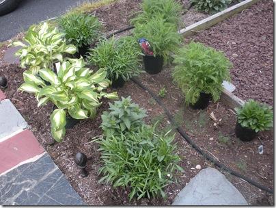 plants 5-1-10 002