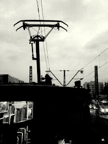 M.photos4139.jpg