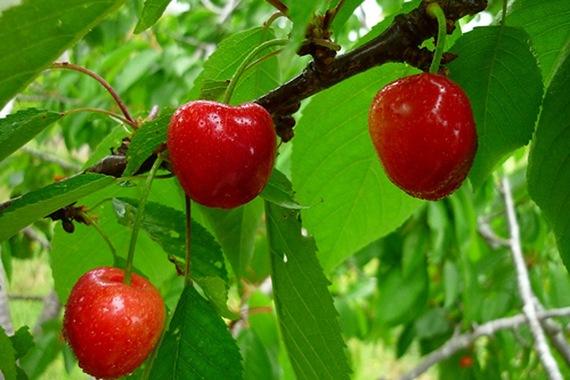 los tomates suben el acido urico medicina acido urico en sangre que medico trata el acido urico