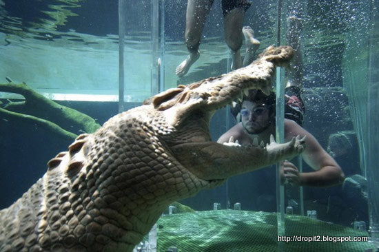 crocodile_cool place to swim.jpg