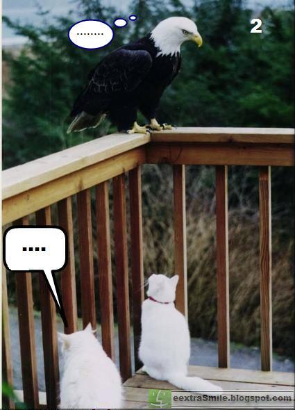 eagle thinking.jpg