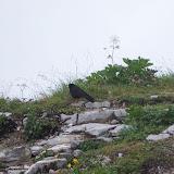 Fågel på toppen av Kehlstein