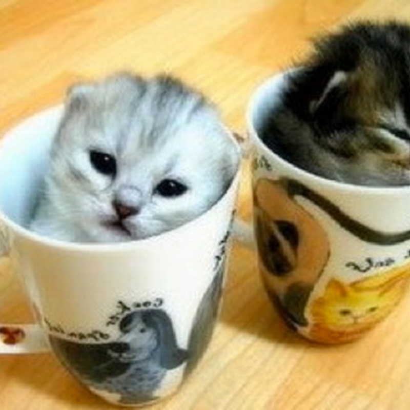 Como gosto de Gatos
