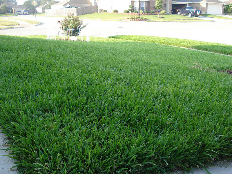 how to tell if grass seed is still good