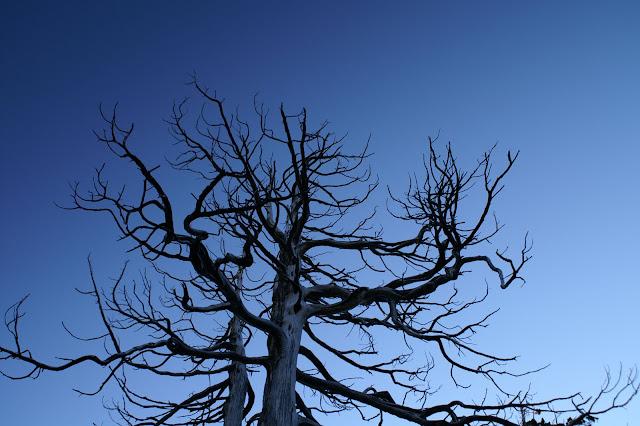 枯樹.JPG