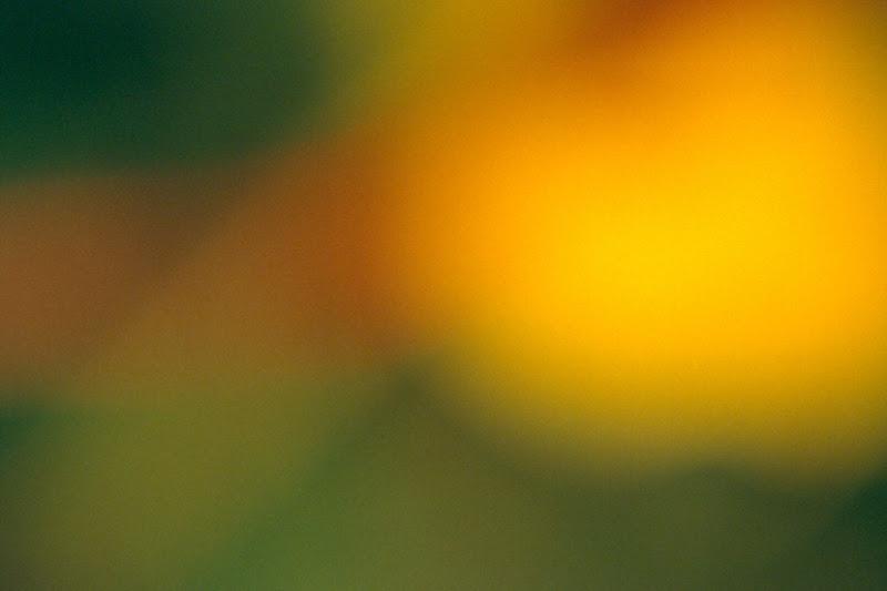 454 amarillo sobre verde