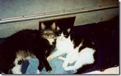 Pudd & Mongo
