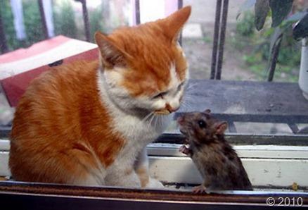 cat-mouse-1