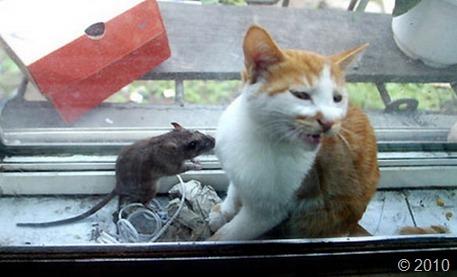 friendship-cat-mouse