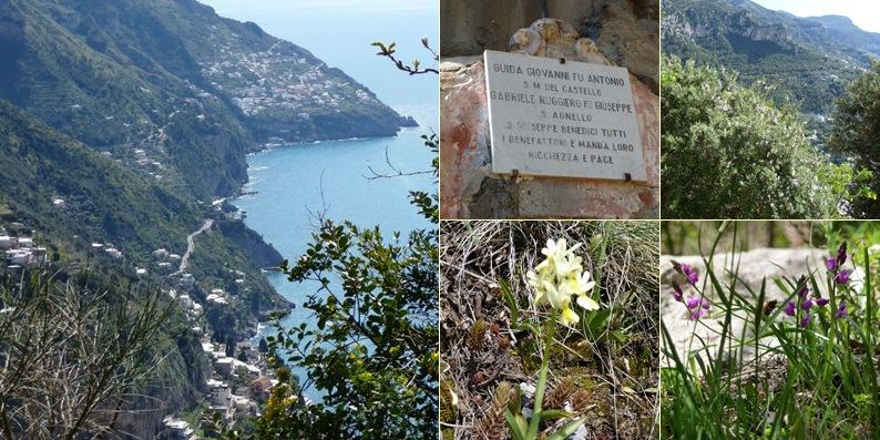 View Flora on the mountain