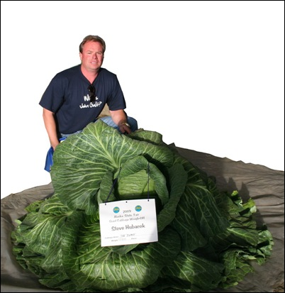 127-pound cabbage grown by Steve Hubacek_resize