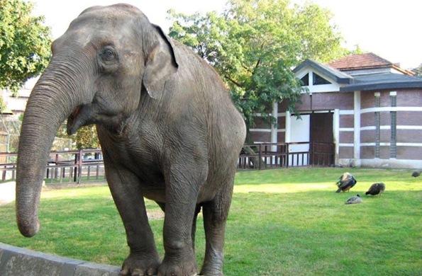 Belgrade zoo 01
