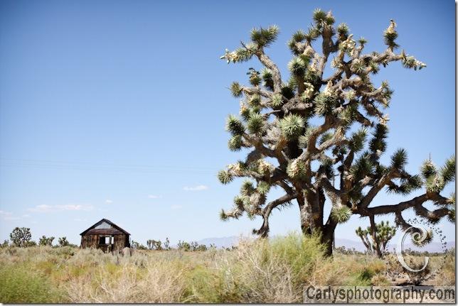 Mojave Desert-25