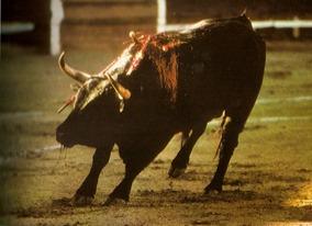 Muerte toro tecrio 001_thumb[2]