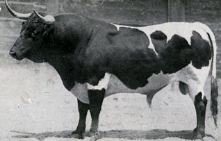 toro-de-martinez - copia