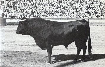 Pascual Marquez 001