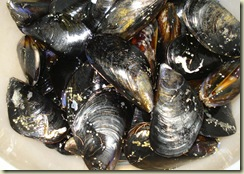 mussels 1_1_1
