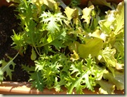 balcony salad_1_1