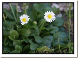 flower - skajul10