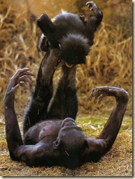 bonobo20mom20and20child