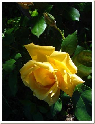 234 Flores