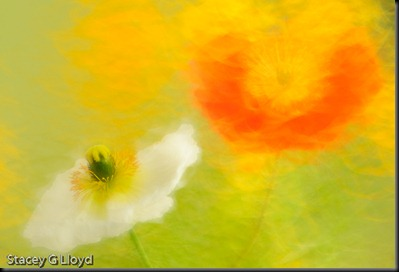 Blog_20100324_1