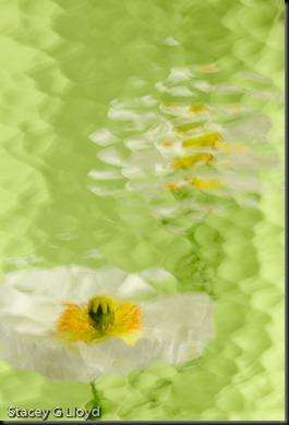 Blog_20100322_1