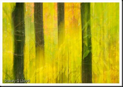 Leaves and Trees, Hoyt Arboretum, Portland Oregon
