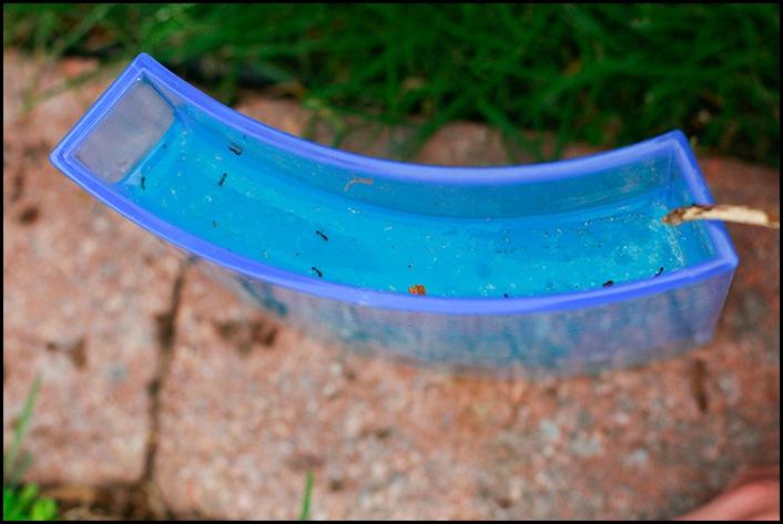Ants14