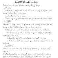 LAS PLANTAS-1