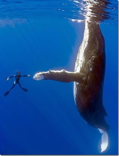 whale shake