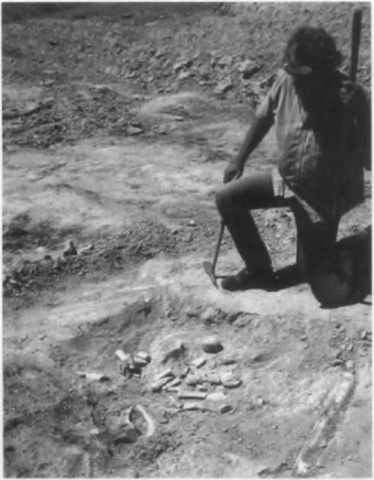Outcrop of Round Mountain Silt, Sharktooth Hill, California. L. G. Barnes is looking at cetacean remains, including part of a cetothere.