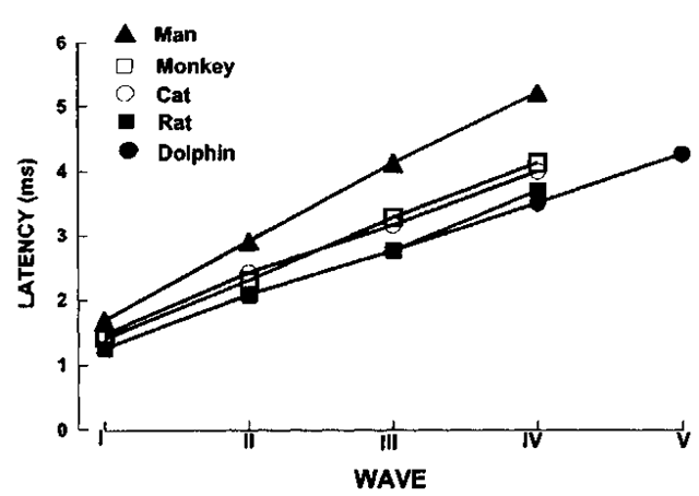 Brain stem-evoked potential latency for different animals.