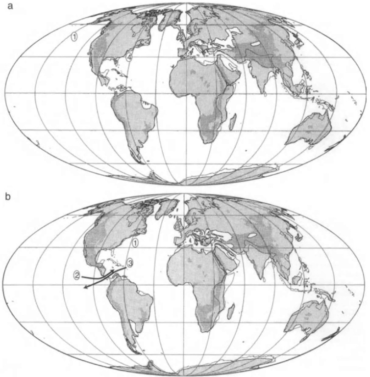 """Reconstruction of continents, ocean basins, and paleocoastlines in the (a) early Miocene (20 Ma) (1, early records of archaic pinnipeds, odobenids, and desmatophocids) and (b) middle Miocene (12 Ma) (1, early well-documented. phocids; 2, dispersal of """"monachines"""" and odobenids to Atlantic; 3, dispersal of phocines to South Pacific; and 4, isolation of phocines in remnants of Paratethys Sea and in North Atlantic)."""