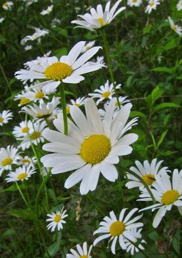 Daisy-2010-05-31-09-07.jpg