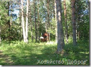 lembolovo_Priroda_03