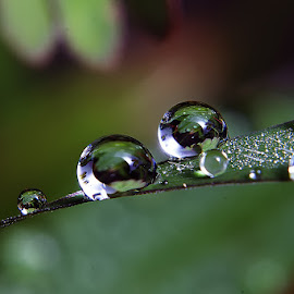 Simple by Sengkiu Pasaribu - Nature Up Close Natural Waterdrops