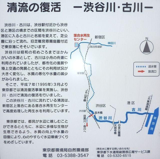渋谷川・古川 清流復活事業