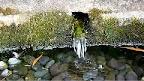 楊柳水 湧水