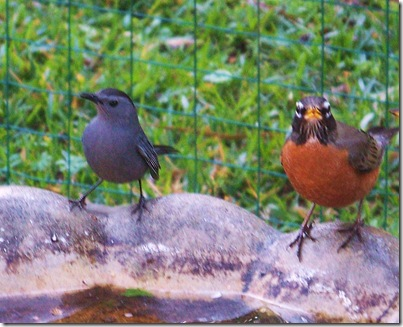 3.4.09 birds 012
