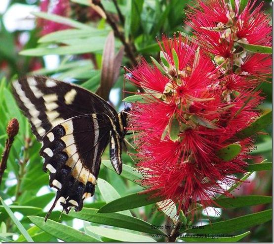 butterfly 002.JPG