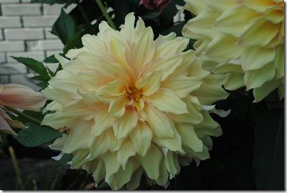Flowers & Ben 002
