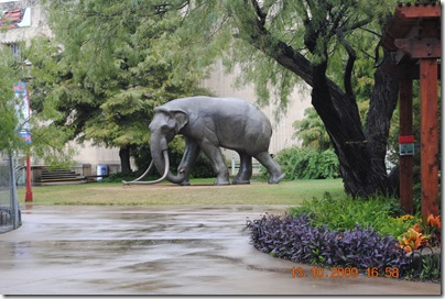 Texas October 2009 013