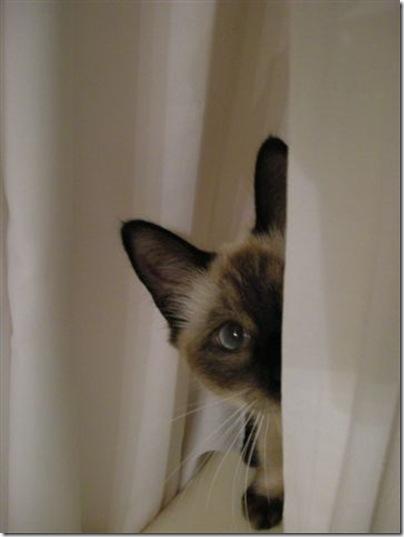 Lucy Peek A Boo