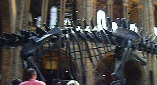 Dinosaurkropp