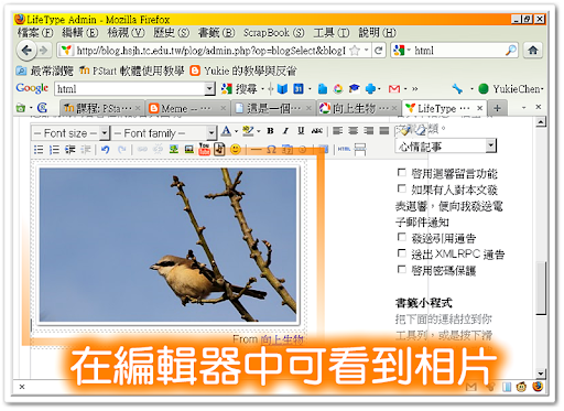 在編輯器中看到 PicasaWeb 的相片
