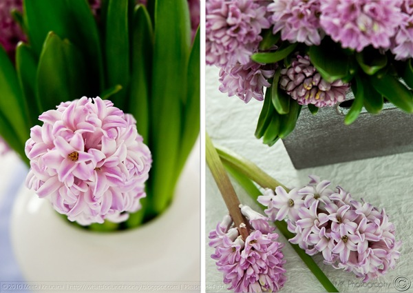 Hyacinth Diptych (01) by MeetaK